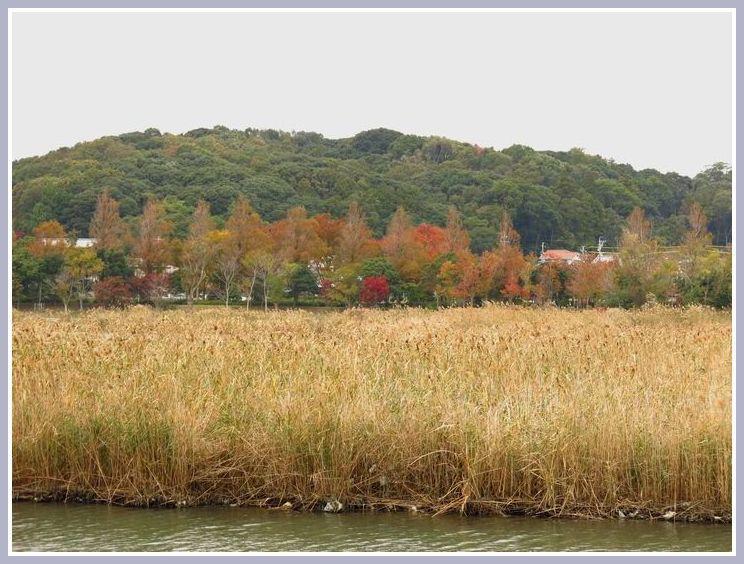 2013 11 14 098 佐鳴湖 1