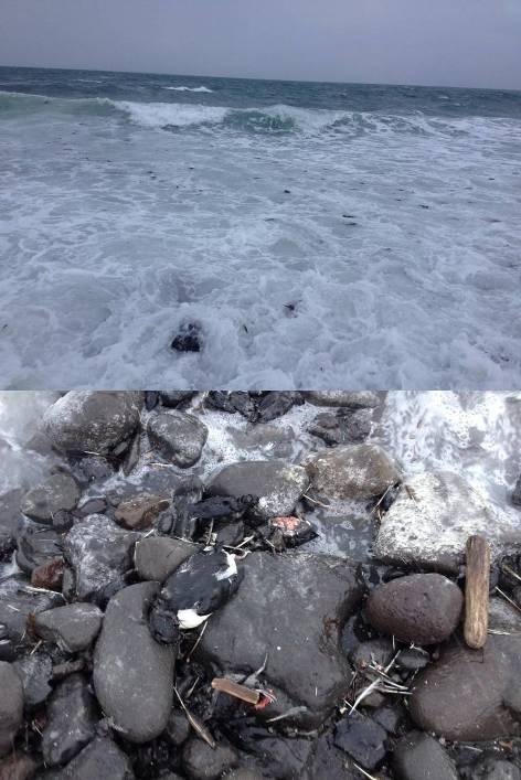 Birds washed up