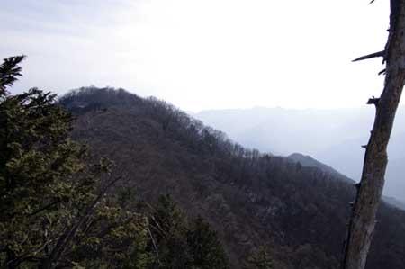 子持山-大持山間の小ピークから大持山