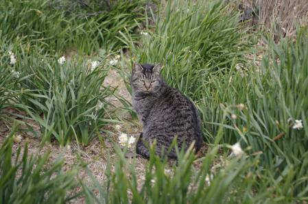 城ヶ島公園・駐車場猫