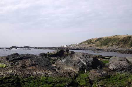 城ヶ島灯台を望む