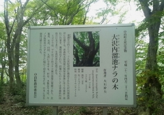 レッツ中泊 (7)_600