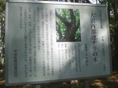 大沢内W (6)_600
