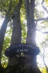 大沢内W (10)_600