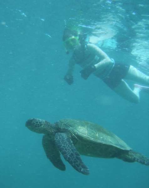 Snorkeling with Honu