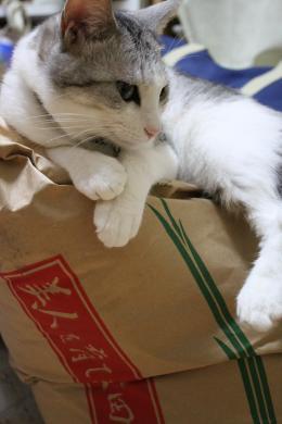 お米の番してます