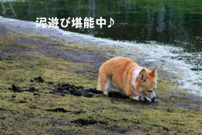082_20120901121101.jpg