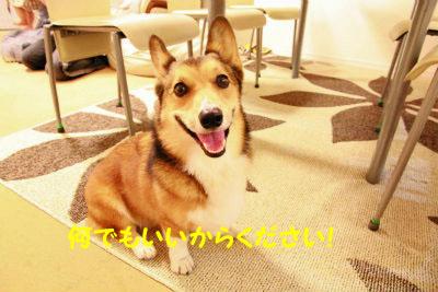 105_20120812220312.jpg