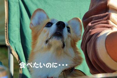 291_20121106152019.jpg