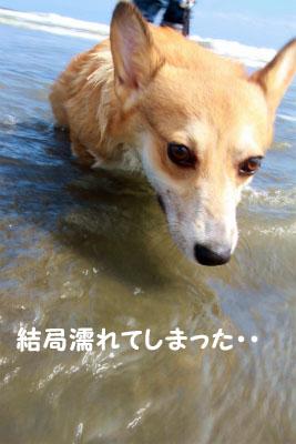 371_20121001214044.jpg