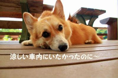 426_20120807210101.jpg