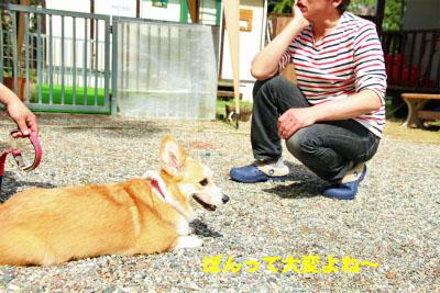 498_20120506135710.jpg