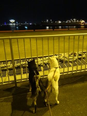 青森港夜の散策1