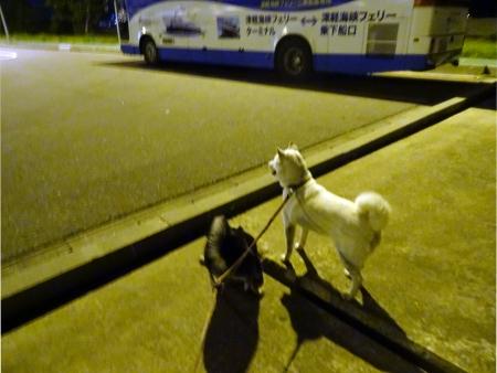 青森港夜の散策2