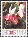 stman0304.jpg