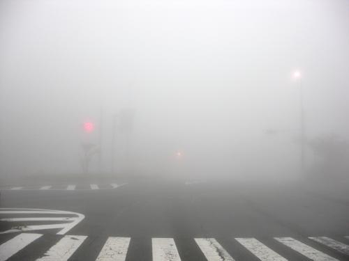 霧の中、赤信号・・・のはず
