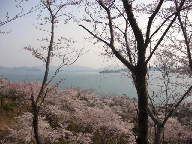 桜と瀬戸内海