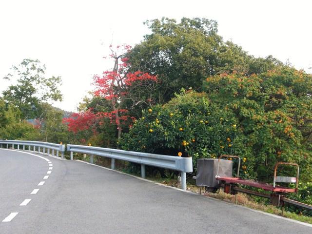 z3-030.蜜柑と紅葉