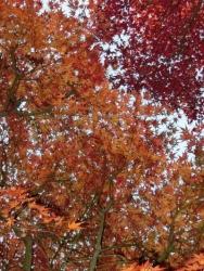 上野桜木会館の紅葉