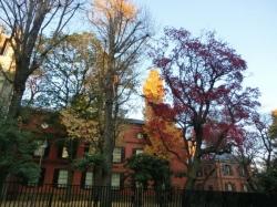 秋の東京芸大旧校舎