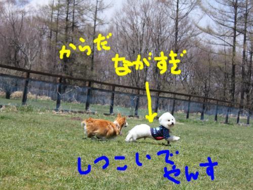 4_20110530152134.jpg