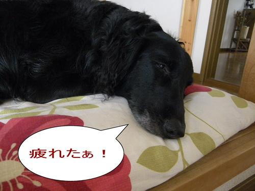 10_20120415154712.jpg