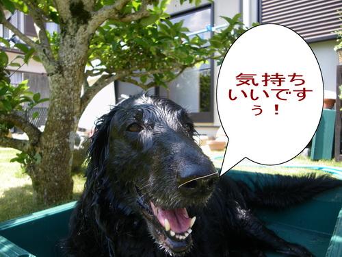 16_20120610074243.jpg