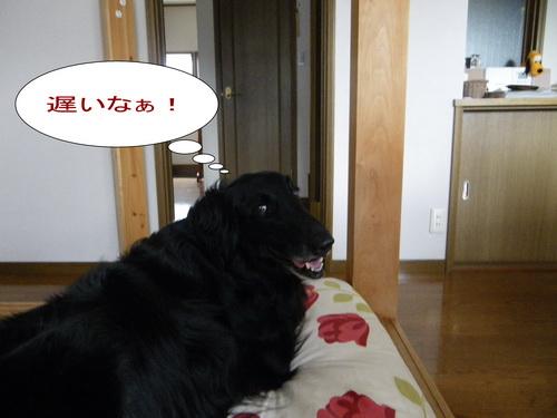 8_20120711155428.jpg