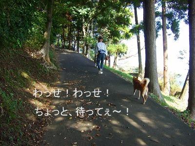 20101027バズちゃんと遊ぶ 006