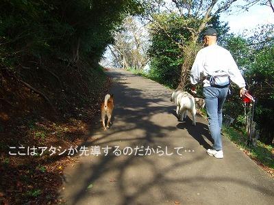 20101027バズちゃんと遊ぶ 007