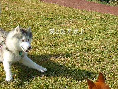 20101027バズちゃんと遊ぶ 015