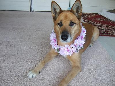 20101104ハワイのお土産 002