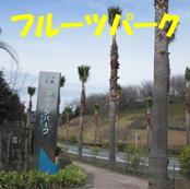5_20110308171955.jpg