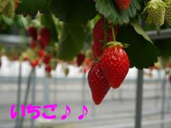 6_20110308171954.jpg