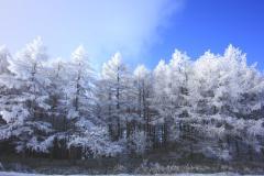 高ボッチ_初冬