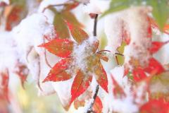 塩嶺小鳥の森_紅葉と雪