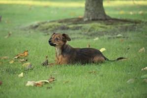 ミックス犬_歯科大の庭
