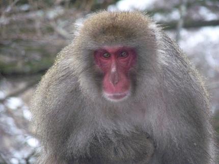 猿@華厳_その1