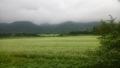 20140808_02蕎麦畑
