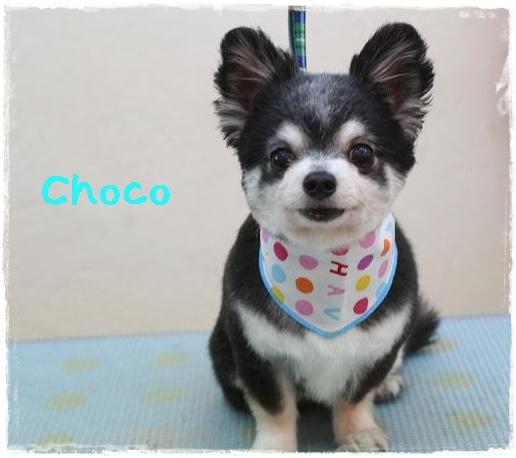 choco10.jpg