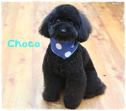 choco1_20120524105837.jpg