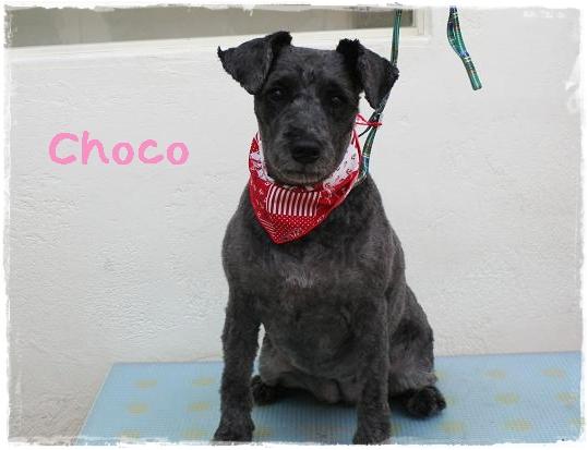 choco7.jpg