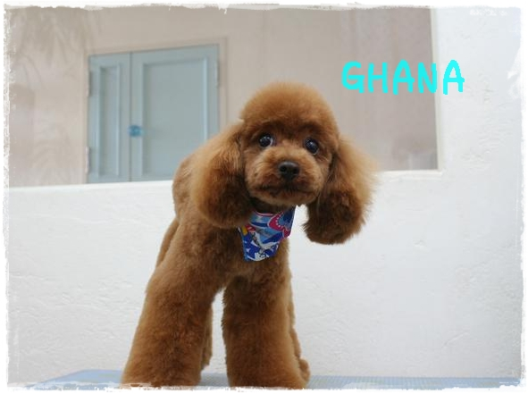 ghana7_20120229153514.jpg