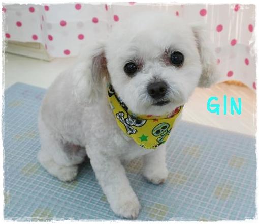 gin6.jpg