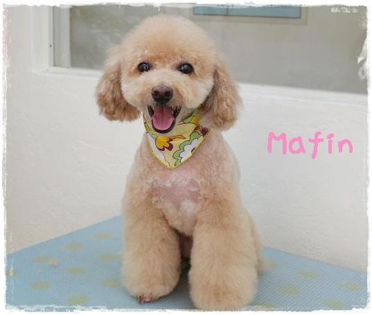 mafin7.jpg