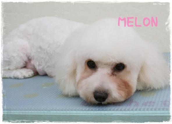 melon8.jpg