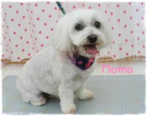 momo7.jpg