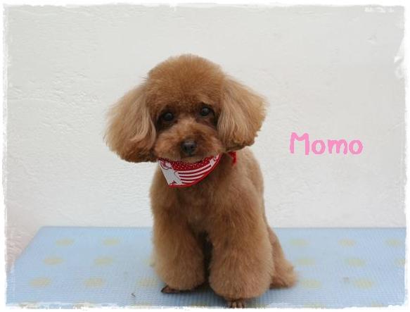 momo9_20120425143416.jpg
