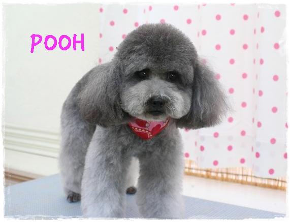 pooh5_20120229153500.jpg