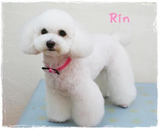 rin3_20120524105950.jpg